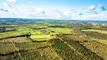 KBI Global Investors helps get trees planted in Ireland