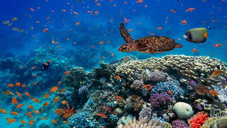 Investors urge development of biodiversity metrics